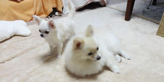 もえぎの動物病院の犬たち