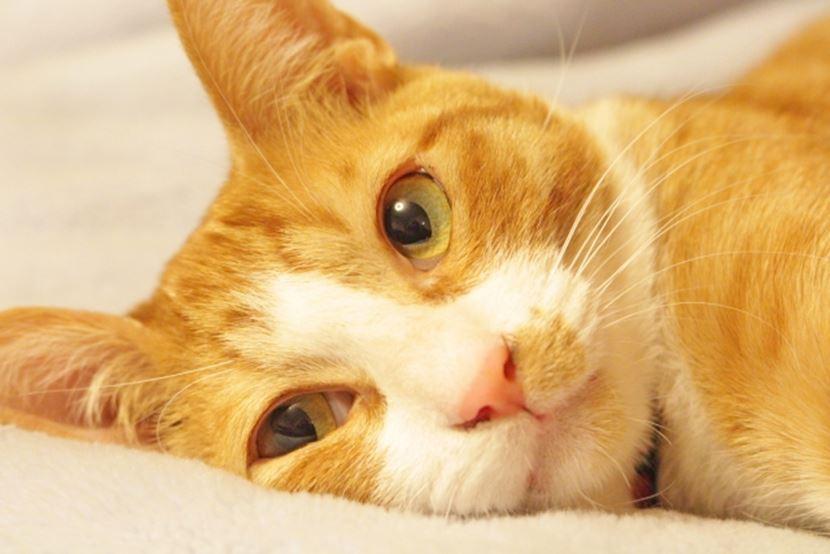 横になって上を見ている猫