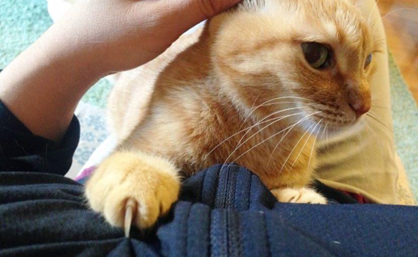 猫を抱っこ