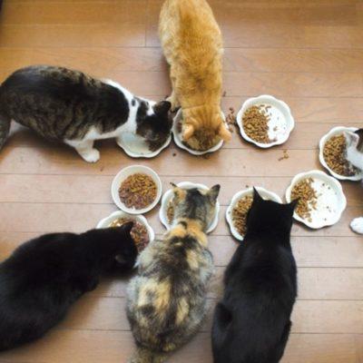 食事中の猫たち